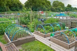 small kitchen layouts ideas vegetable garden design layout garden ideas and garden