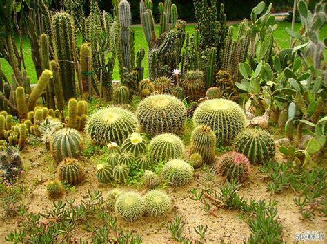 Intresanti fakti par kaktusiem! - Spoki