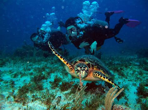 diving in alanya scuba diving in the clear waters of turkey s mediterranean vigo tours