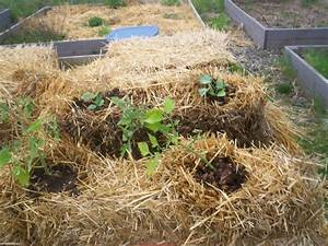 Straw Bale Gardening Part One Seeking Sanctuary At