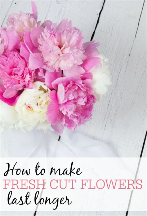 Make Cut Flowers Last Longer how to make fresh cut flowers last longer frugally