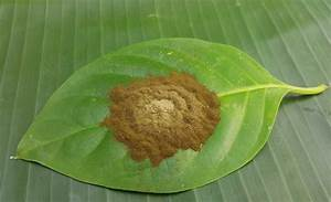 Kratom Plant, Used to Help with Heroin Cravings, Remains ...