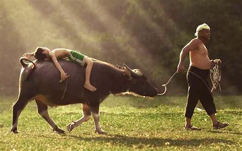mowgli malaysia akrab  haiwan kerana sayang  malaysia today