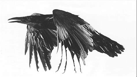 The Raven By Edgar Allan Poe (with Creepy Sounds) Youtube