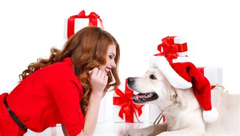 10 best christmas gifts for dog parents top dog tips