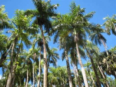 Palmentuin | Foto | Lies & Thijs in Suriname