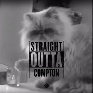 Straight Outta Compton Gato Malo (Thug Life Cat) : cats