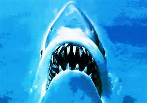Jaws Movie Shark