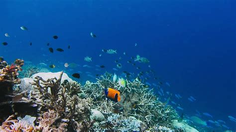 Underwater landscape of coral reef. Amazing underwater marine life world. Scuba diving and ...