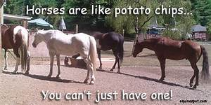 How Much Does I... Horse Owning Quotes
