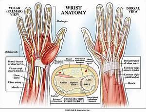 Wrist Diagram