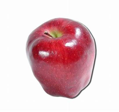 Apple Clker Domain Clipart Clip