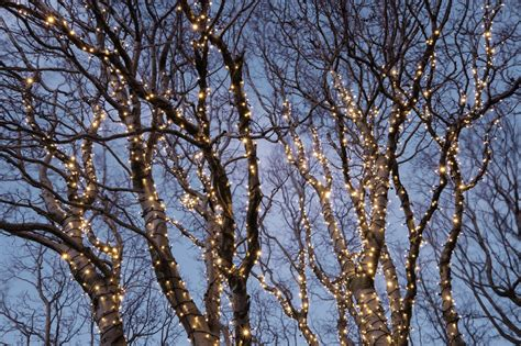 christmas lights in trees how to put christmas lights on tall outdoor trees davey blog