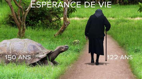 photo esp 233 rance de vie la tortue g 233 ante des gal 225 pagos