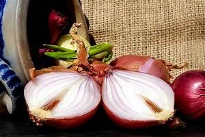 Zwiebeln Richtig Lagern : zwiebeln pflanzen ernten und lagern wiressengesund ~ Watch28wear.com Haus und Dekorationen