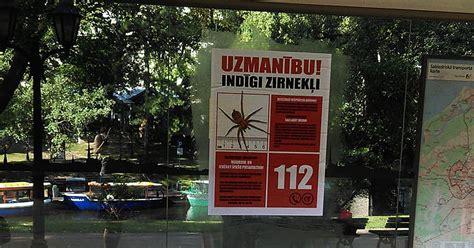 Viltus ziņas par it kā bīstamiem zirnekļiem tikušas ...