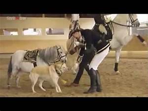 Showpony Poet Am Langen Zgel Zirkuslektionen Fr Pony