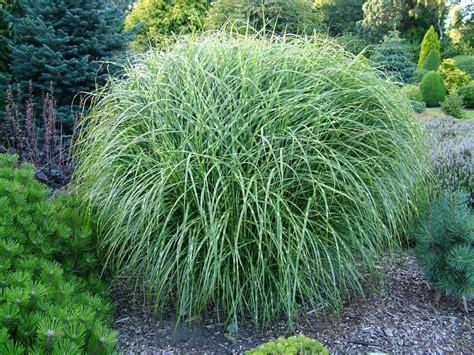 grass for landscaping foxhollow garden