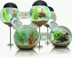 Cool fish bowl | amazing fish ! | Pinterest