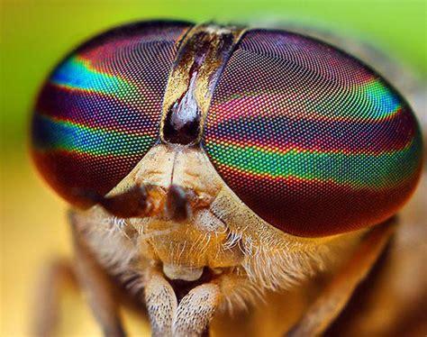 incredible eye macros