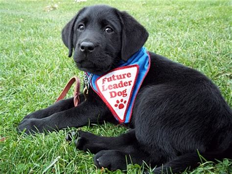 leader dogs for the blind family rochester welcomes annual leader