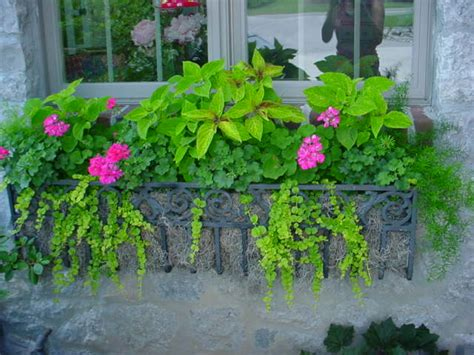 easy annuals  window boxes