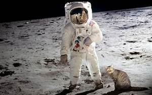 Cat Astronaut Wallpaper (page 5) - Pics about space