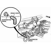 Drain Tube Ford Taurus  FreeAutoMechanic