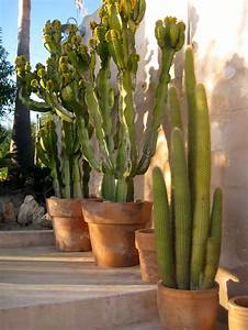 Pot A Cactus : 1351 best palm springs style gardening in the desert images on pinterest cacti garden desert ~ Farleysfitness.com Idées de Décoration