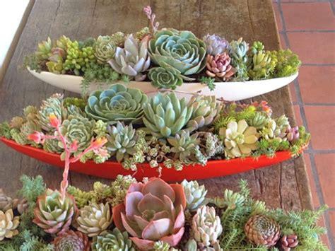 easy care mini succulent garden ideas world  succulents