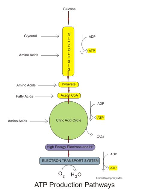 difference  aerobic  anaerobic respiration