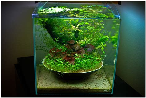Fish Tank Aquascaping by October 2010 Aquascape Of The Month Quot Ikebana