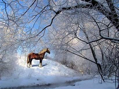 Animais Winter Horse Snow Screensaver Brown Horses