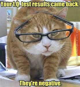 smart cat smart cat with glasses cat pictures