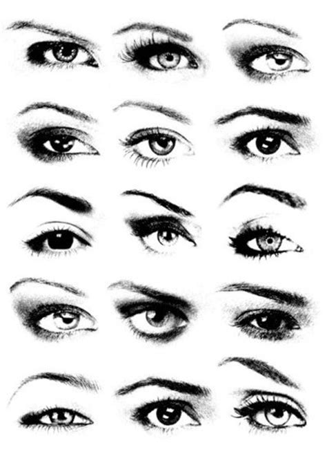 eyebrows  beauty thesis