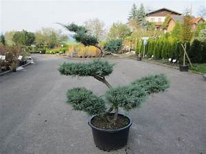 Garten bonsai baumschule salzburg spezialist fur for Garten planen mit bonsai anzuchterde
