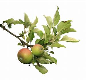 Zimmerpflanzen Alte Sorten : apfelbaum alte sorte pflanzen ~ Michelbontemps.com Haus und Dekorationen