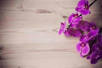Orchid Wallpapers Orchidee Come Orchidea Orchids Fondos