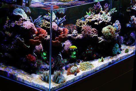 cheap reef tank lighting aquaray led aquarium light reef planted lighting grobeam