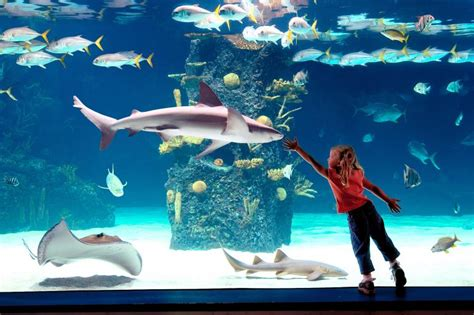 winter family days at the aquarium newport on the levee