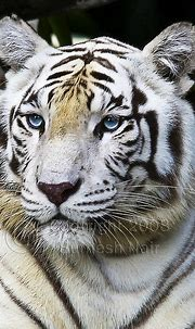 Pin by dd flam on Share Your Most Amazing...   Animals ...