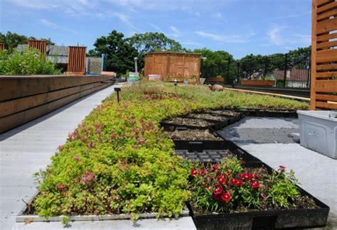 Urban Gardening : How To Organize An Urban Gardening Project In 4 Easy Steps