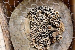 Tiere Im Insektenhotel : insektenhotel aus baumstamm bauen anleitung und tipps ~ Whattoseeinmadrid.com Haus und Dekorationen