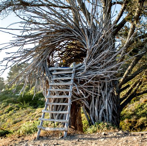 Nesting House - twigitecture building human nests the new york times
