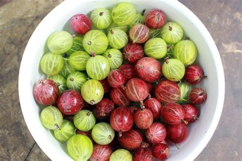 Gooseberry Thokku Abcds Of Cooking Abcds Of Cooking