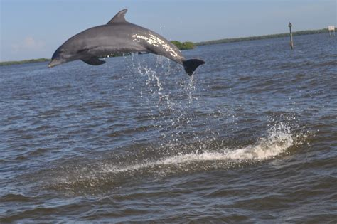 Everglades Boat Tours Near Fort Myers by Fort Myers Dolphin Cruise And Fishing Charter