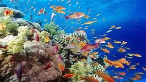Underwater Archives