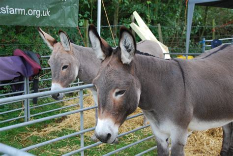 donkeys pony london