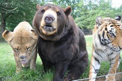 animals   friends