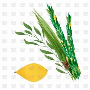 Symbols of Jewish holiday Succoth Vector Image #88487 ...